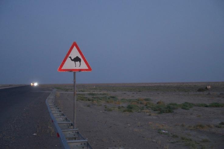 Achtung Kamel oder sind das Dromedare